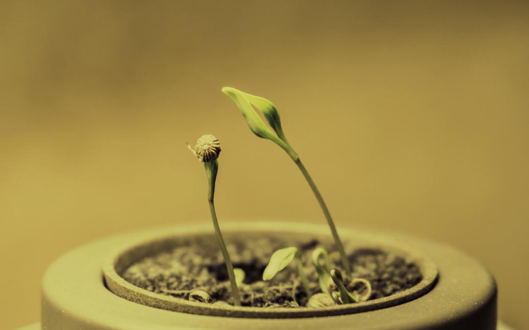 Atelier : Réalisons nos semis